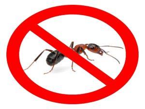 тебешир срещу мравки и хлебарки