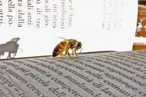 Литература за пчеларя и кошерите